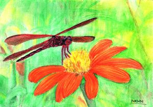 Little Dragonfly and the Wild Daisy