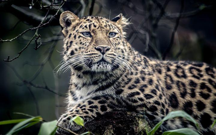 Tiger - amazing