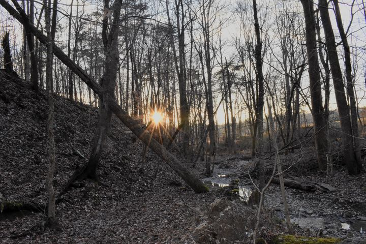 Woods with the Sunset - Rylan's Amazing Photography