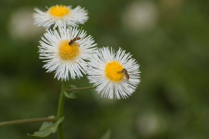Bees on a flower - Rylan's Amazing Photography