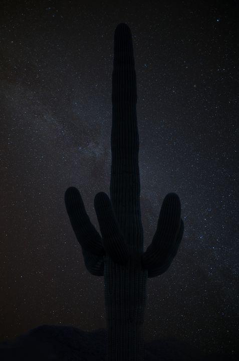 Saguaro Stars - Steve Gadomski