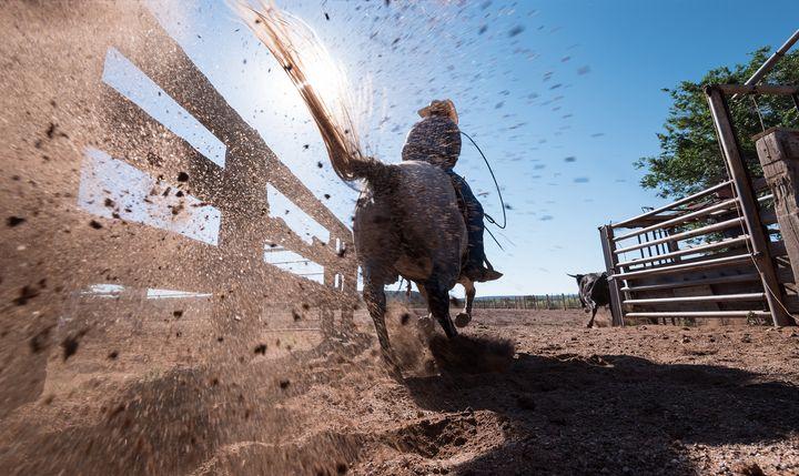 Horse Power - Steve Gadomski