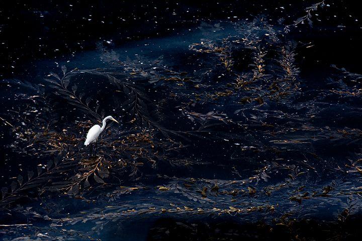 Egret Starry Night - Colorida Art Gallery