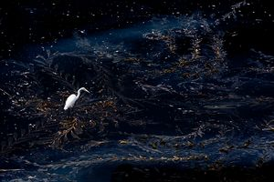 Egret Starry Night
