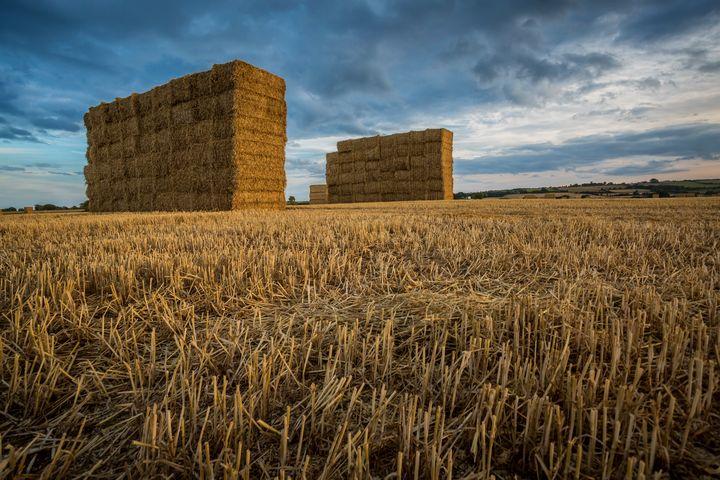 Harvest Time - Sidarta Corral