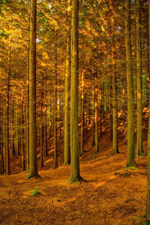 Enchanted Forest - Sidarta Corral