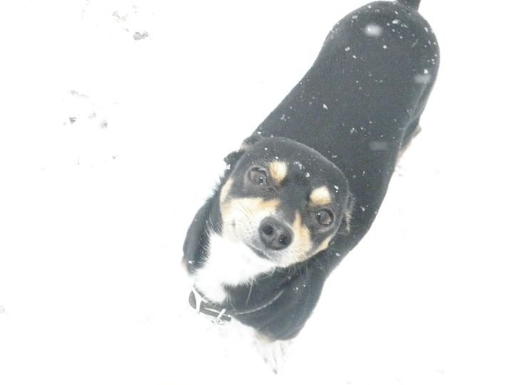 black dog - Ohio Grown Art