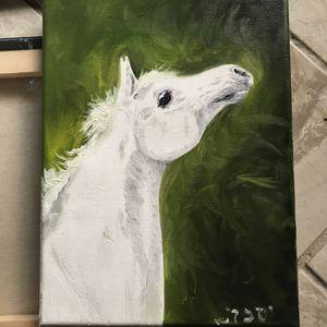 Authentic Arabian Stallion