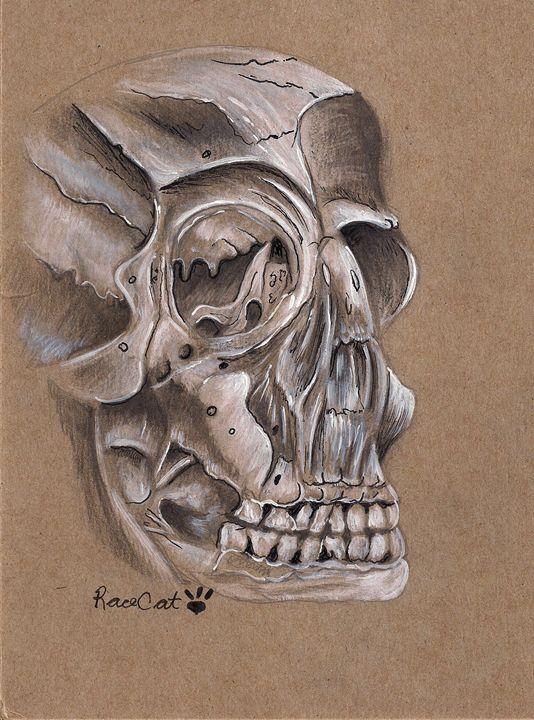 Skull Study in Arylic - Racecat7