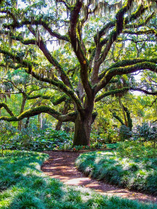 Tree of Wonder - Aaron Alvarez