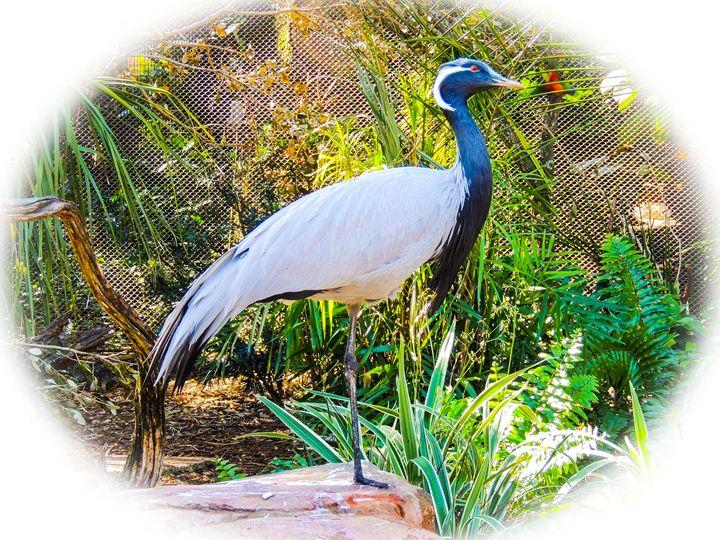 Bird of Serenity - Aaron Alvarez