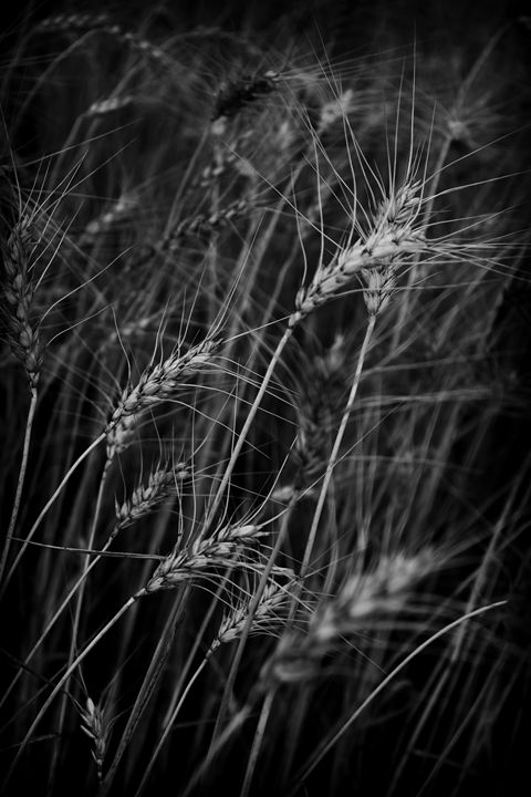The crop - Manoel Almeida