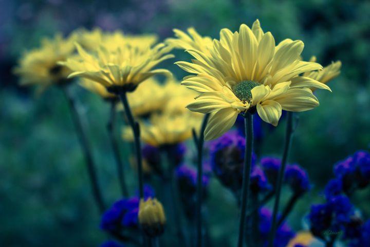 Sunflowers - Albert-Lenora Stewart