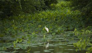 Lily Creek