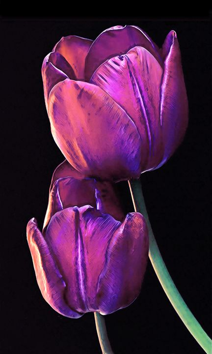 First Spring Blooms - Phoenix Art Works