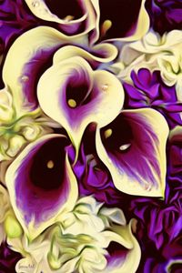 Purple Calla Lillies - Phoenix Art Works