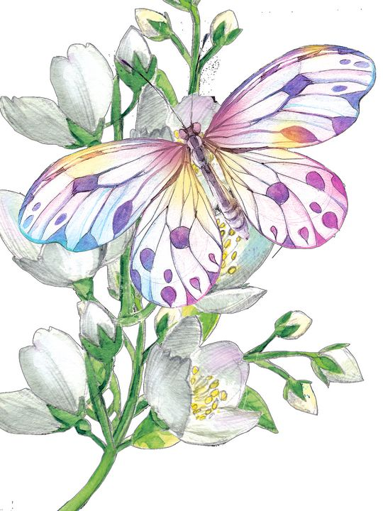 Jasmine and a butterfly - Phoenix Art Works