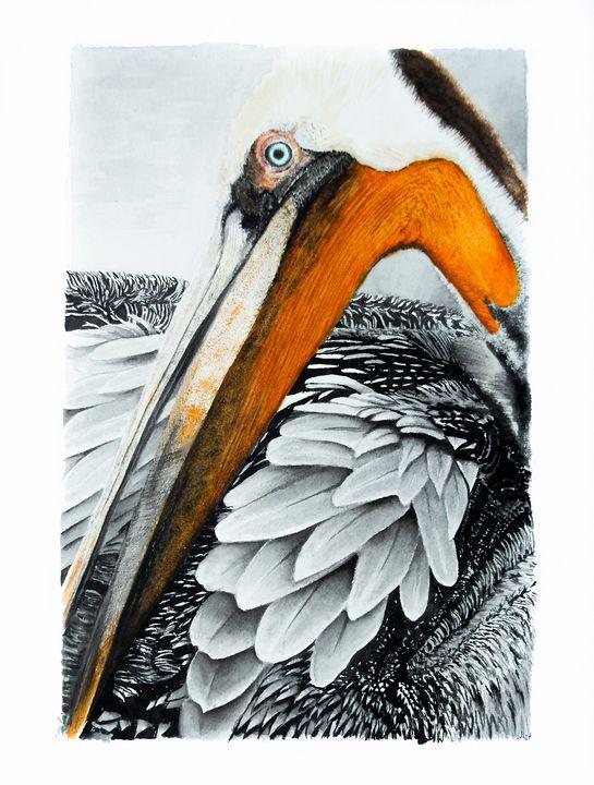 Pelican King - Cindocan