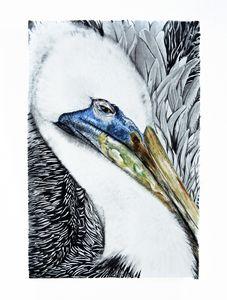 Pelican Queen