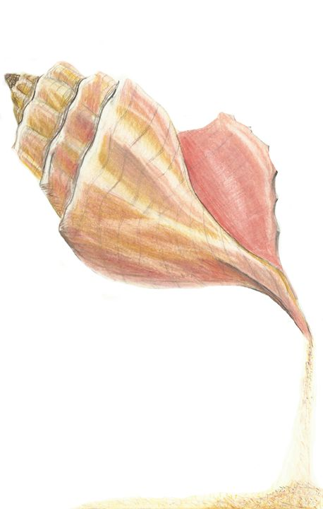 Seashell - TSM Studio