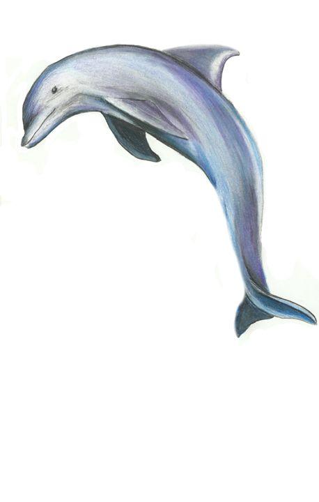 Dolphin - TSM Studio