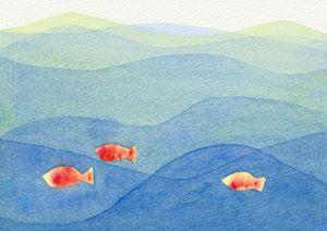 Three Colorful Fish