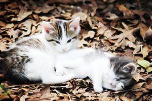 Chillin Kittens