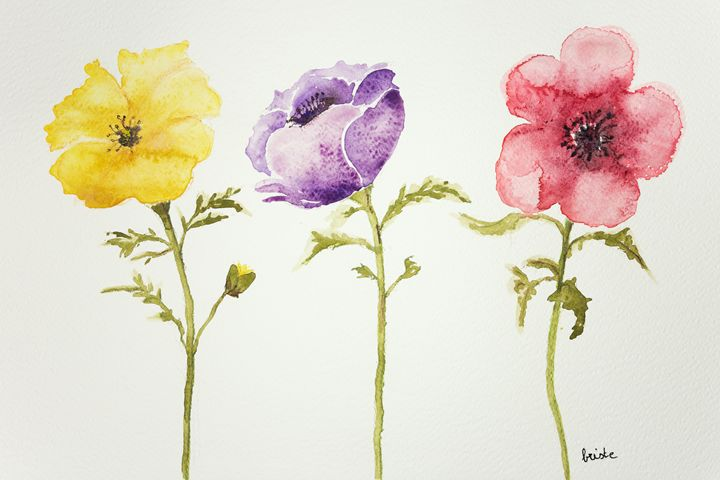 Three anemones on a white background - BRISTE