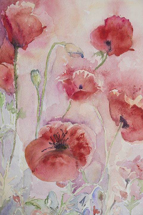 Several poppies with pink and yellow - BRISTE