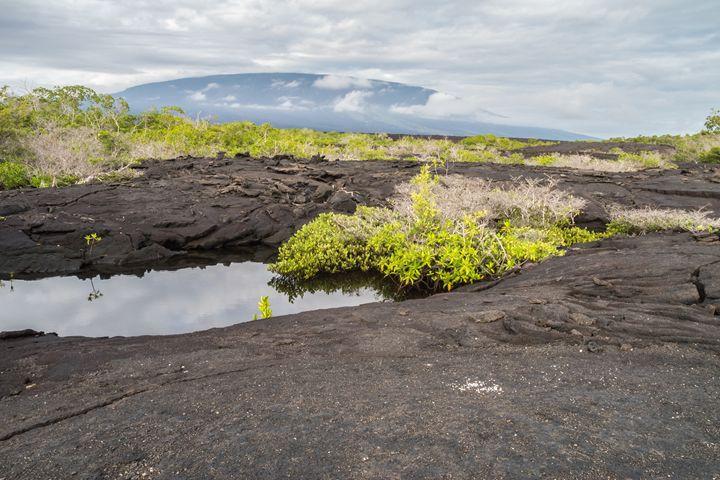Puddle in the lava rocks on Fernandi - BRISTE