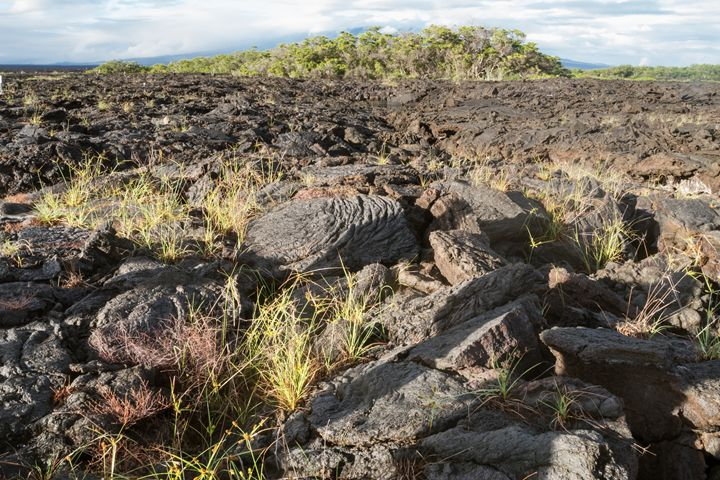 Lava field with ropy pahoehoe - BRISTE