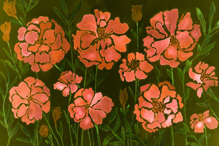 Impression of flamingo pink marigold - BRISTE