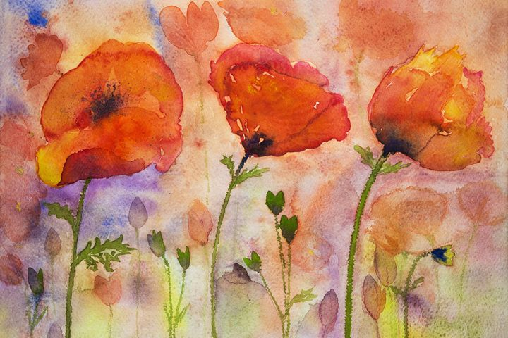 Colorfull poppies and buds. - BRISTE