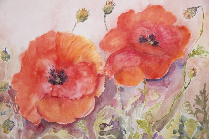 Poppies and buds - BRISTE