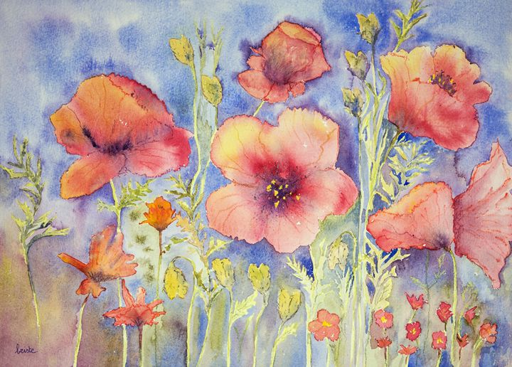 Field of naive poppies. GVP1518 - BRISTE