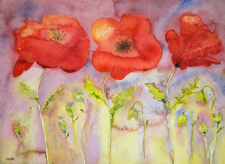 Three poppies against a reddisch sky - BRISTE