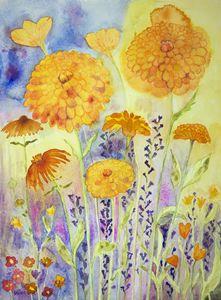 Marigold in a sunny field. gvp1533