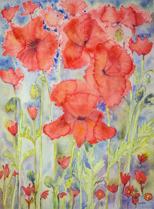 Poppies above and below. gvp1537 - BRISTE