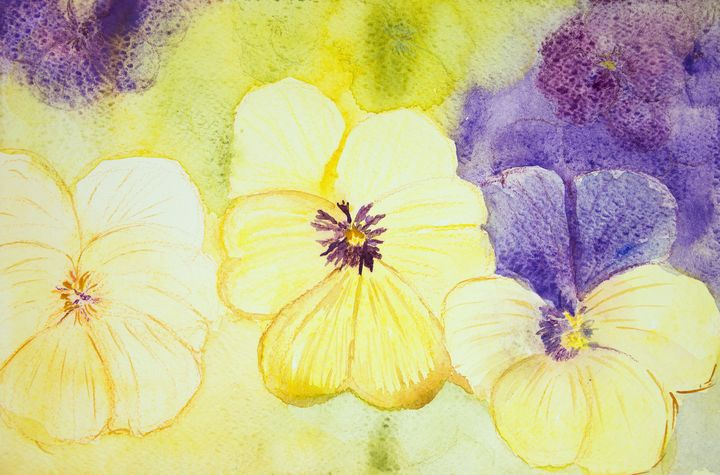 Yellow and purple violets. - BRISTE