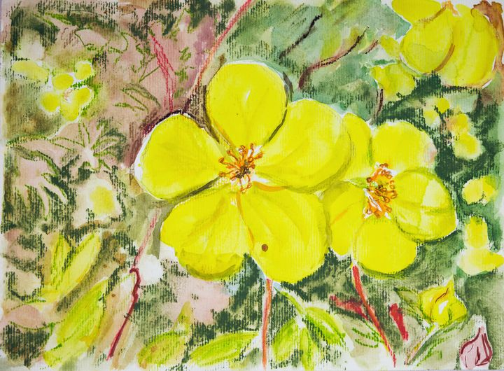 Yellow violet - BRISTE