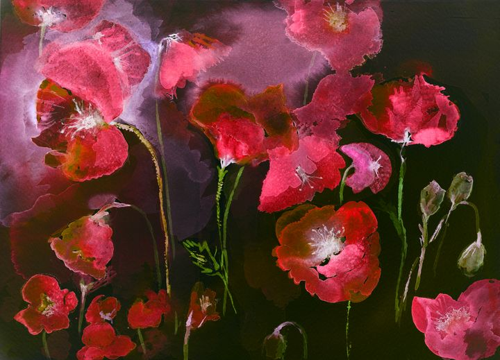 Poppies in red and black. - BRISTE
