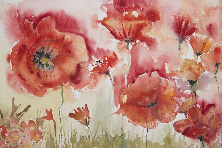 Poppies in the field - BRISTE