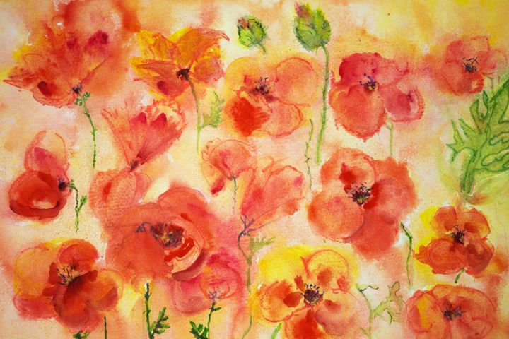 Several poppies and some green buds. - BRISTE