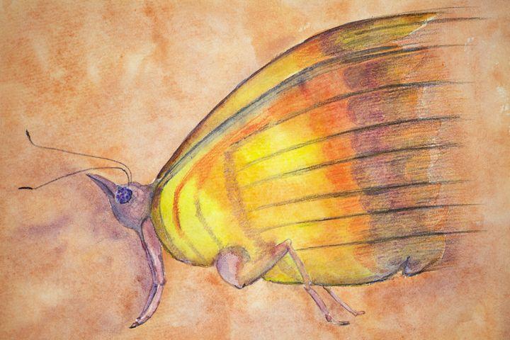 Phantasy butterfly - BRISTE