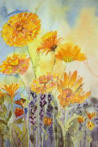 Marigold in the field. - BRISTE