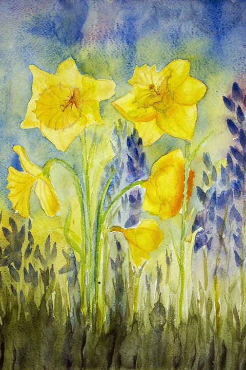Yellow narcissus in the field. - BRISTE