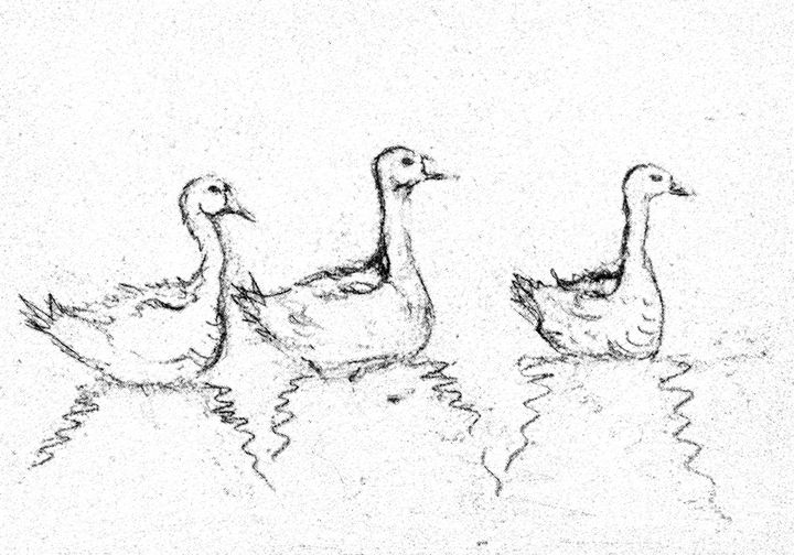 Three gooses DRAWING - BRISTE