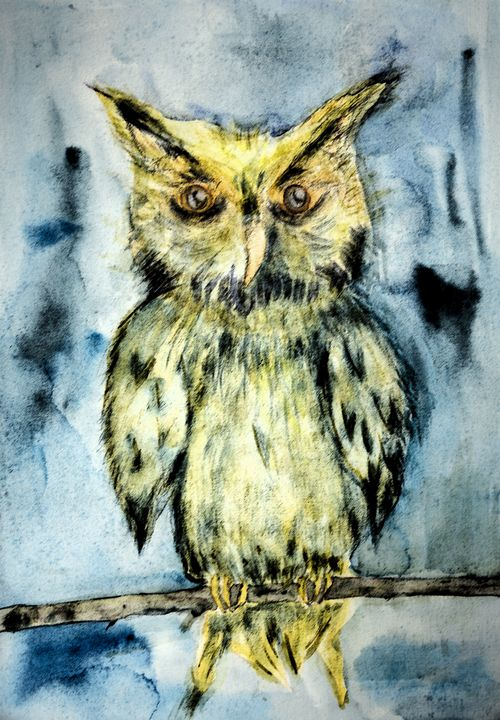 Yellow owl on a branch on a turquois - BRISTE