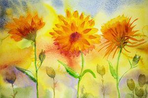 Naive marigold. - BRISTE