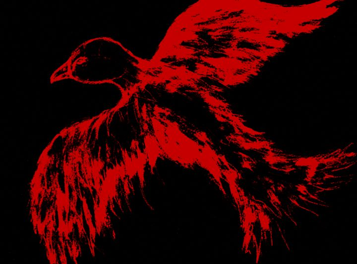 Red falcon with black background. - BRISTE